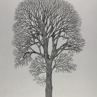 Keeper Tree. Graphite Drawing