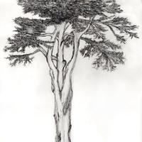 Tree On Guard. graphite on paper