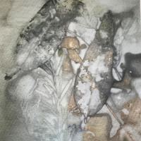 Eco dyed paper on fabric