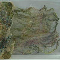 Shell / Textile in Perspex/ 36x28cm