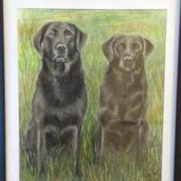 Labradors, pastel and charcoal, 32 x 45 cm