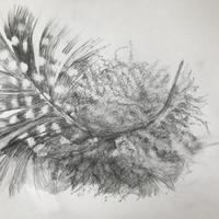 Snow Feather, 24 x 21cm pencil on paper
