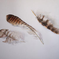Feathers - watercolour