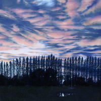 Evening Poplars from Kings Meadow Park/Oil on Canvas/509mm x 406mm