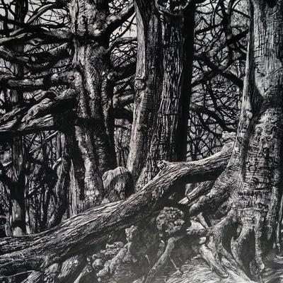 """(untitled - beech at Snelsmore)/ink/12x16"""""""