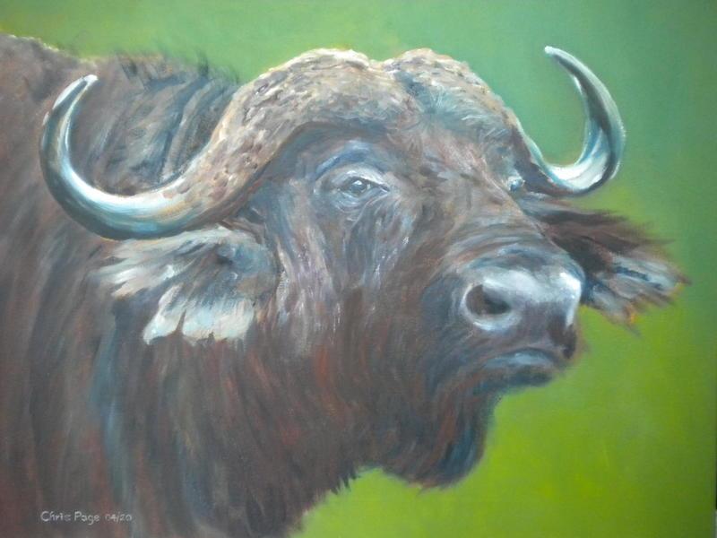 "Water Buffalo / Water Mixable Oils / 20""x16"""