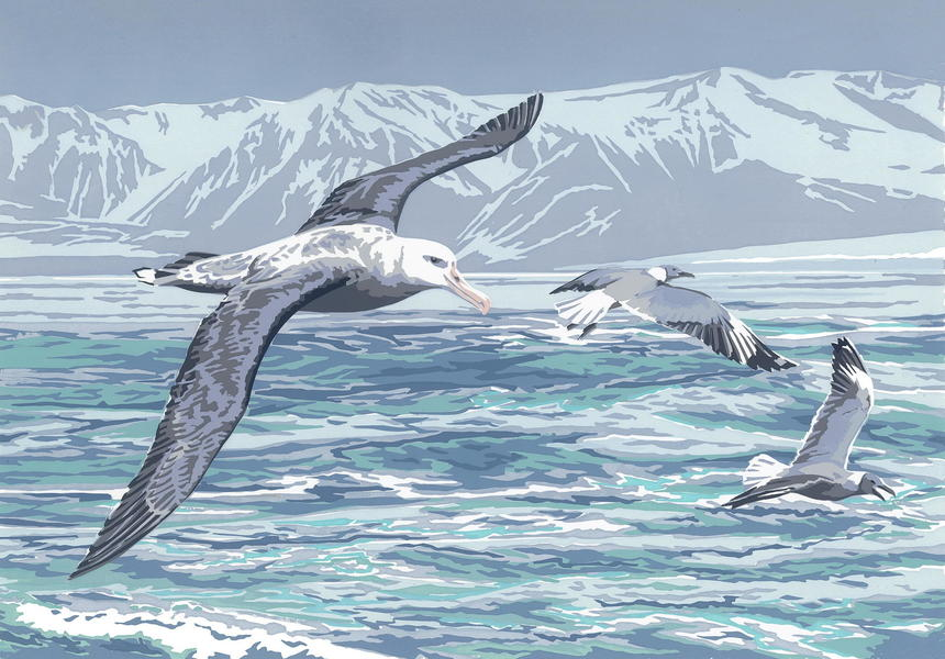"""""""Albatross & Gulls"""" hand-printed acrylic, A3-size deckle-edged image on A2 paper £65"""